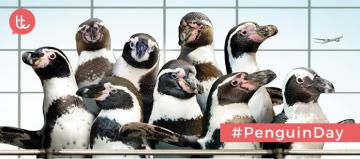 10-campanas-de-publicidad-con pinguinos-como-protagonistas
