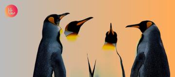 5-lecciones-que-los-pinguinos-nos-ensenan-sobre-colaboracion