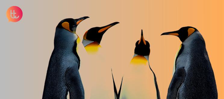 5 lecciones que los pingüinos nos enseñan sobre colaboración