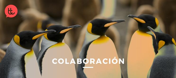8 estrategias pingüino: aprende a colaborar en tu empresa