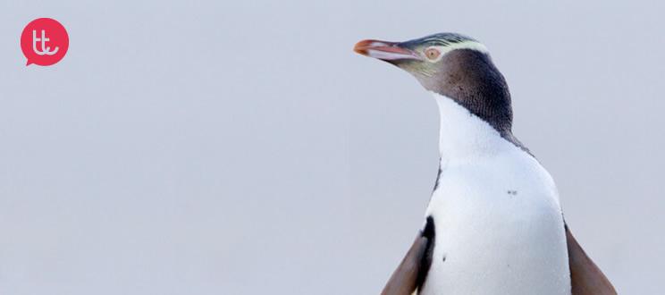 """""""Adopta un pingüino"""": 5 campañas solidarias con los pingüinos"""