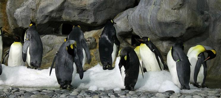 Catástrofe en la Antártida: Miles de crías de pingüino emperador se ahogaron cuando el hielo marino se destruyó debido al mal tiempo.