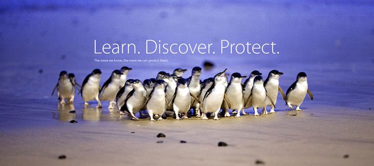 penguin-foundation-adopta-un-pinguino-ttandem