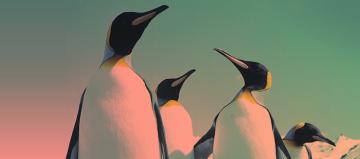 personas-pinguino-grupo