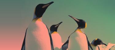 """Las """"personas pingüino"""" sacan lo mejor de sí mismas cuando trabajan en grupo"""