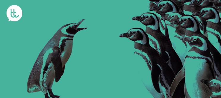 6 lecciones que tu empresa puede aprender de los pingüinos
